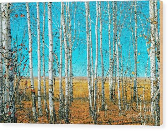 Birch Grove Wood Print by Vangert