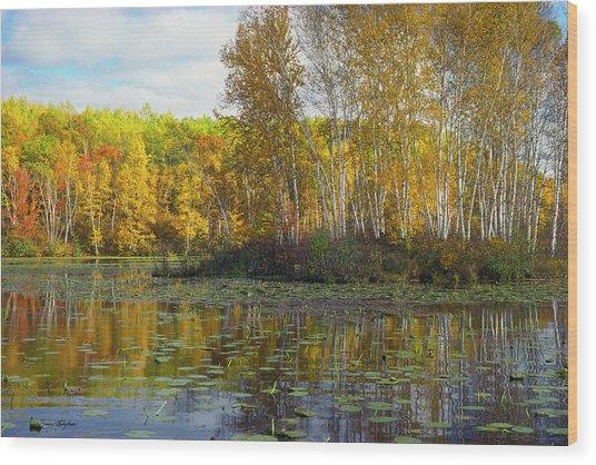Birch Island Wood Print