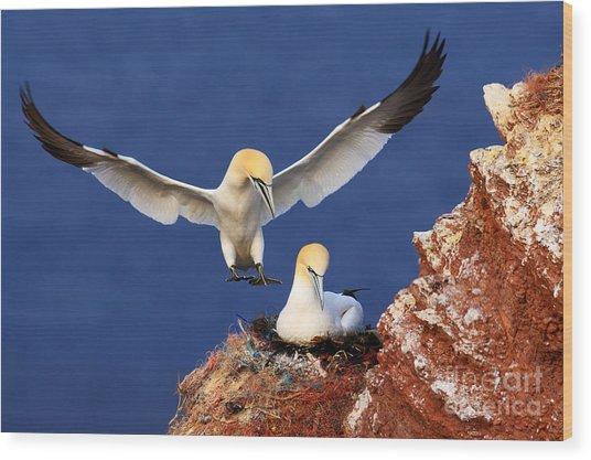 Bird Landind To The Nest With Female Wood Print by Ondrej Prosicky
