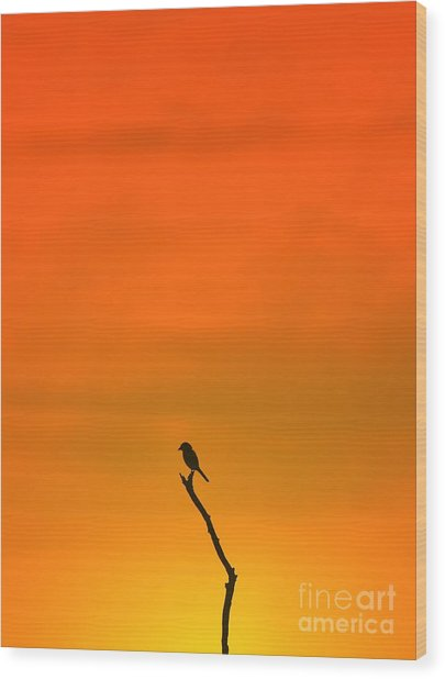 Bird Silhouette - Wildlife Background - Wood Print