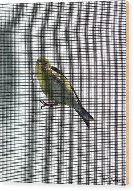 Bird Watching Reversed Wood Print