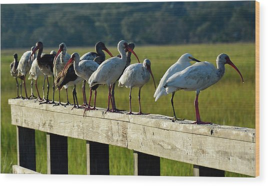 Birds Of A Feather On Jekyll Island Wood Print
