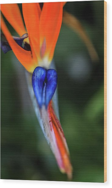 Birds Of Paradise Up Close Wood Print