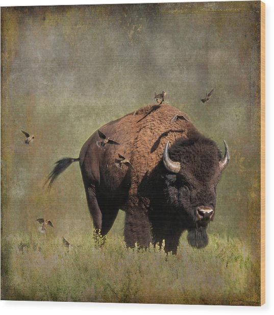 Bison And Friends Wood Print