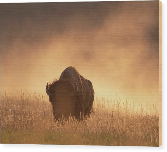 Bison In The Dust 2 Wood Print