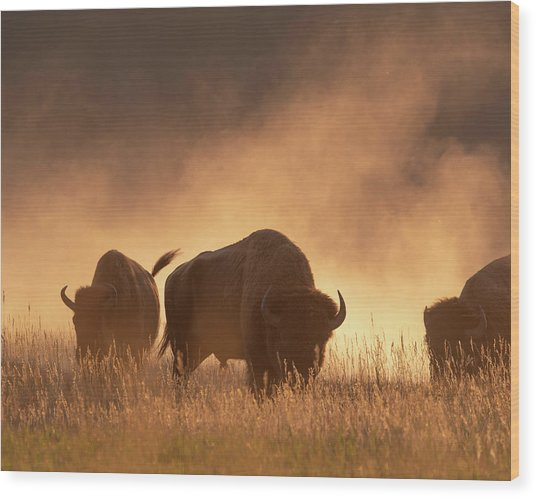 Bison In The Dust Wood Print