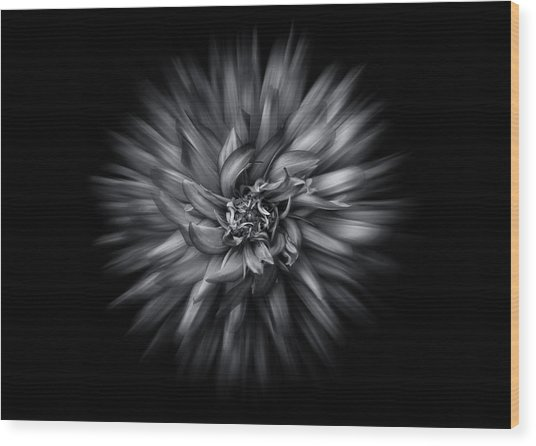 Black And White Flower Flow No 5 Wood Print