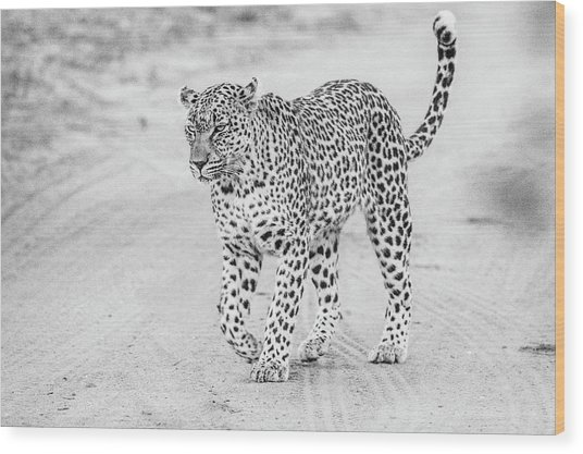Black And White Leopard Walking On A Road Wood Print
