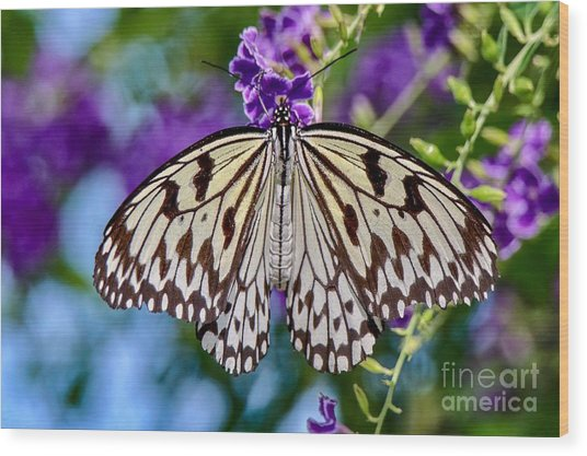 Black And White Paper Kite Butterfly Wood Print