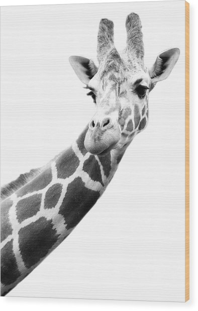 Black And White Portrait Of A Giraffe Wood Print by Design Pics