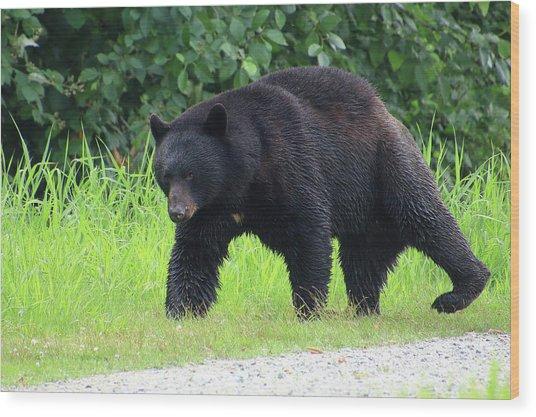 Black Bear Crossing Wood Print