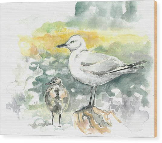 Black-billed Gull Family Wood Print