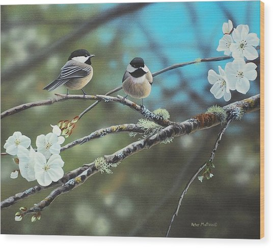 Black Capped Chickadees Wood Print