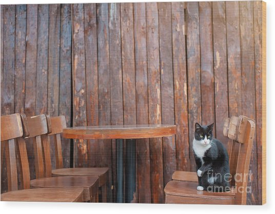 Black Cat Sitting On Chair In Outdoor Wood Print
