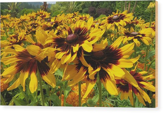 Black-eyed Susan In Your Face Wood Print