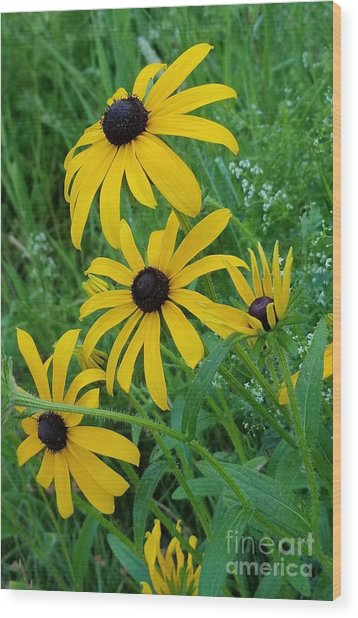 Black Eyed Susans 1 Wood Print
