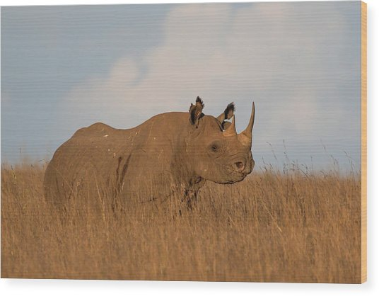 Black Rhino Wood Print