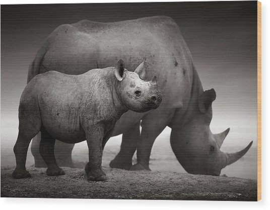 Black Rhinoceros Baby And Cow Wood Print
