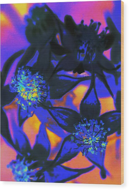 Blackberry Flowers Sunset Neon Wood Print