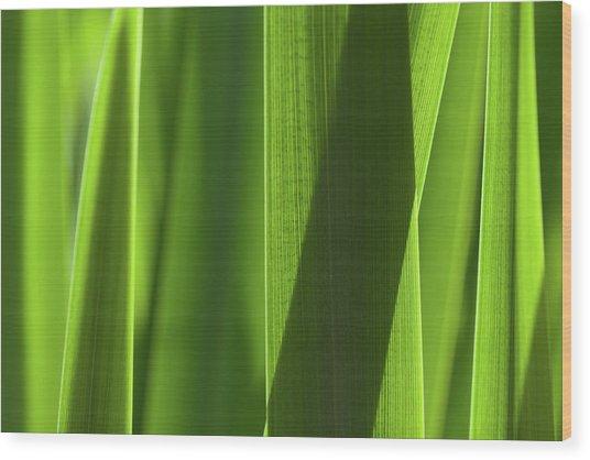 Blades 8851 Wood Print