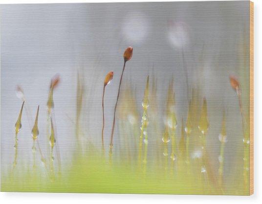 Blooming Moss Wood Print