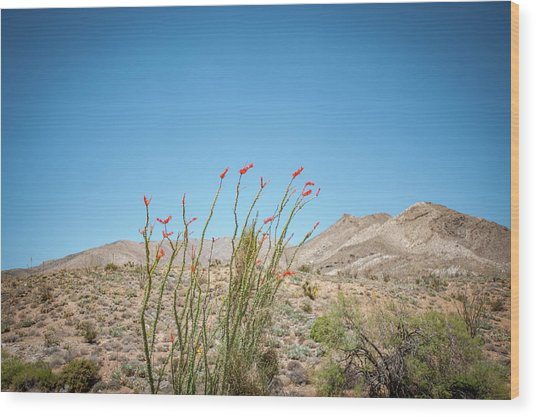 Blooming Ocotillo Wood Print