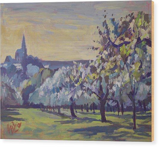 Blossom Trees Near Vijlen Wood Print