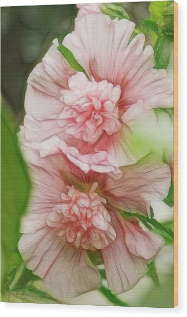 Blossoming Hollyhock Flowers In A Wood Print by Maria Mosolova