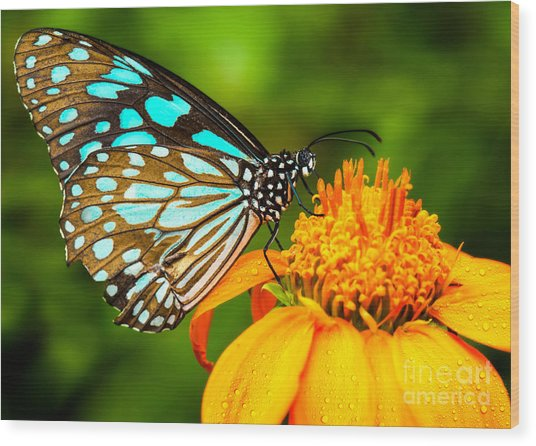 Blue Butterfly Fly In Morning Nature Wood Print