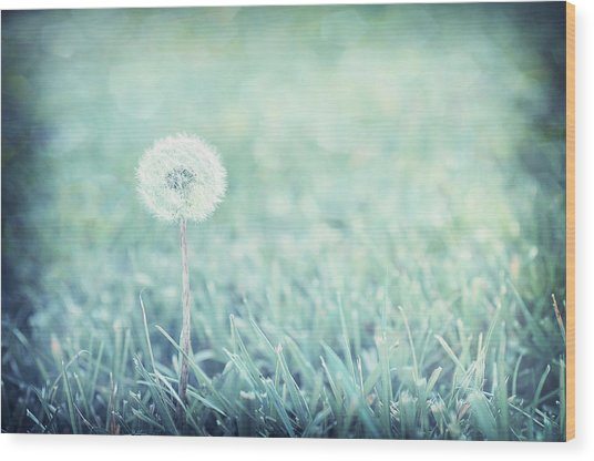 Blue Dandelion Wood Print