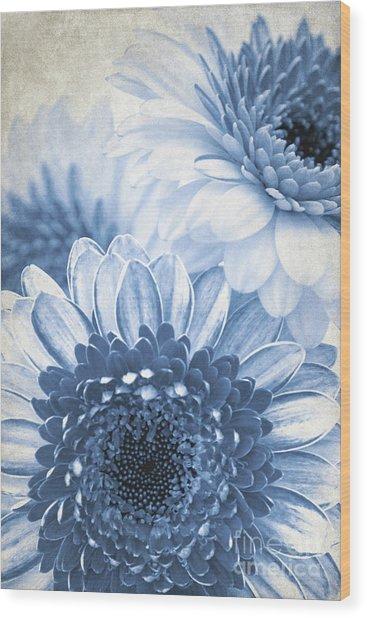 Blue Gerbera Wood Print