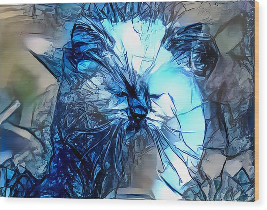 Blue Himmy Cat Wood Print