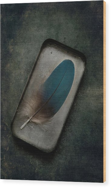 Blue Parrot Feather Wood Print