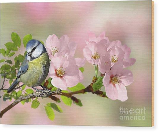Blue Tit On Apple Blossom Wood Print