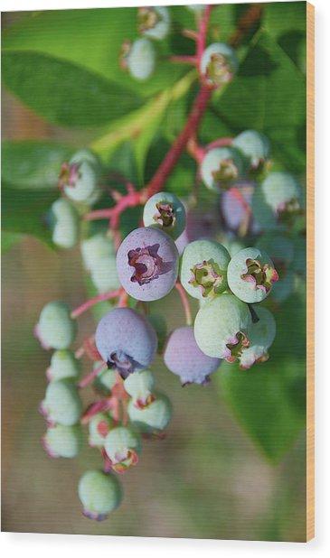 Blueberries Wood Print by ©howd, Howard Lau