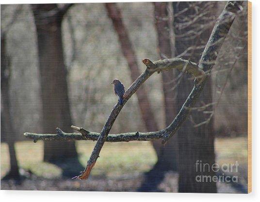 Bluebird, Bluebird, Sing To Me Wood Print