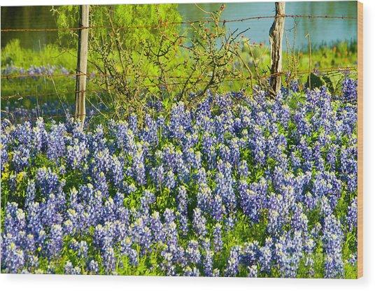 Bluebonnets, Texas Wood Print by Donovan Reese