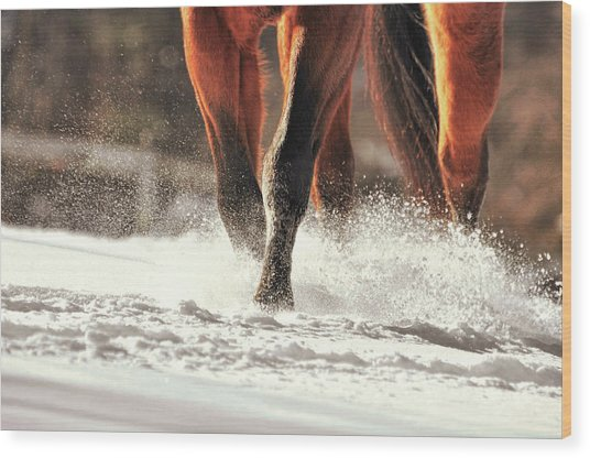 Blustery Trot Wood Print by JAMART Photography
