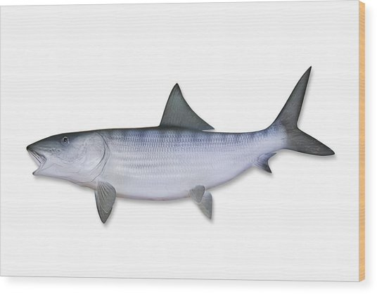 Bonefish With Clipping Path Wood Print by Georgepeters