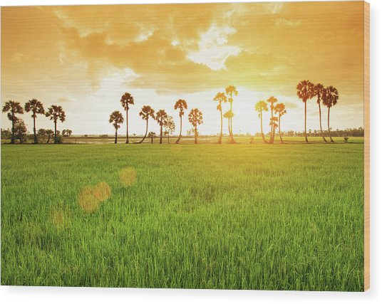 Borassus Flabellifer Field Wood Print by Jethuynh