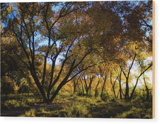 Bosque Color Wood Print
