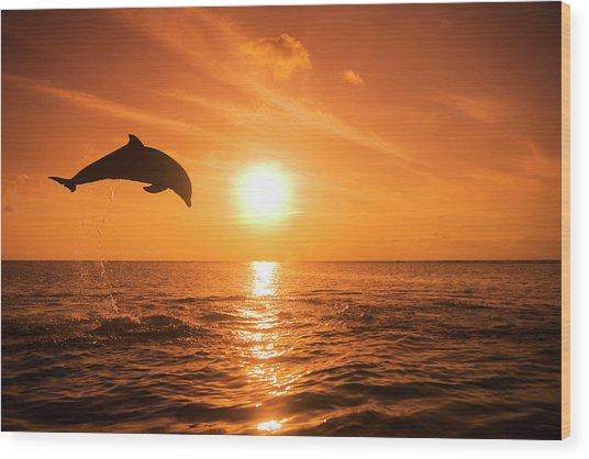 Bottlenose Dolphin Tursiops Truncatus Wood Print by Rene Frederick