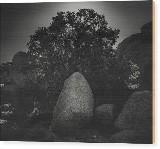 Boulder With Tree Wood Print by Joseph Smith