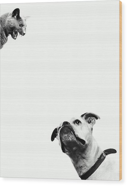 Boxer Dog Looking At Cat Above Head Wood Print by Robert Daly