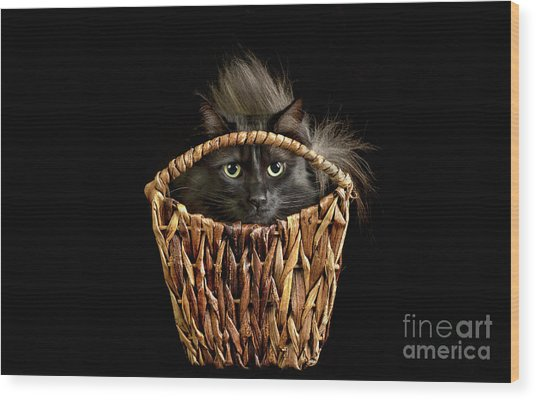 Boyfriend In A Basket Wood Print
