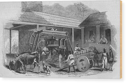 Brazilian Sugar Mill Wood Print by Hulton Archive