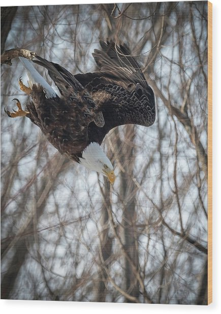 Breakfast On The Fly Wood Print