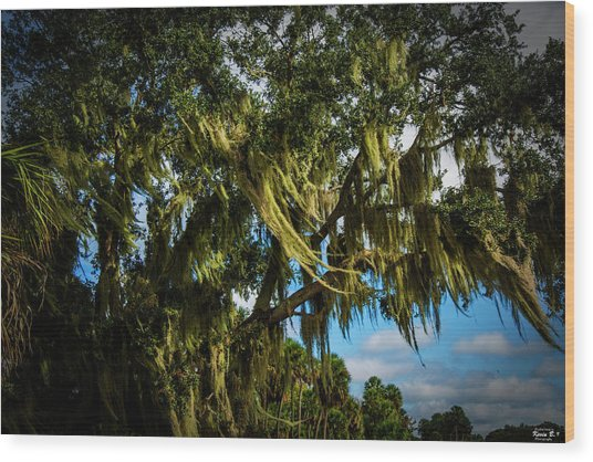 Breezy Florida Day Wood Print