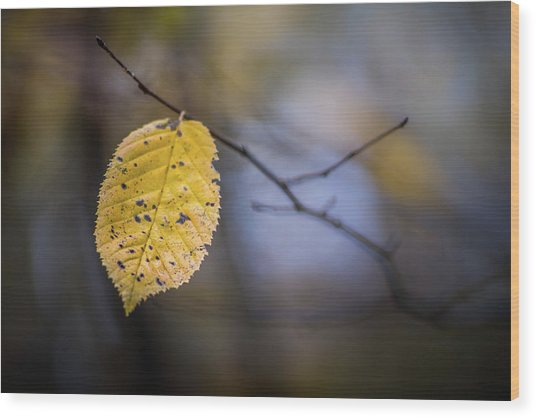 Wood Print featuring the photograph Bright Fall Leaf 1 by Michael Arend