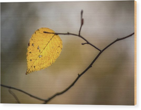 Wood Print featuring the photograph Bright Fall Leaf 10 by Michael Arend